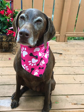 Kona with Pink kerchief 2